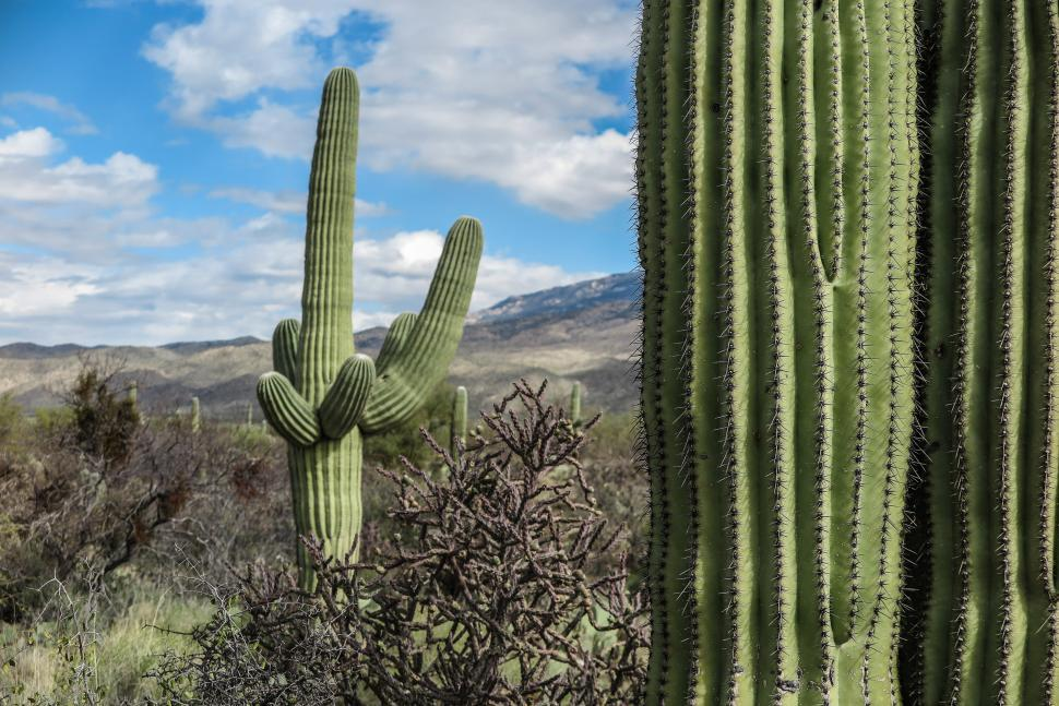 Download Free Stock HD Photo of Saguaro Cactus foreground Online