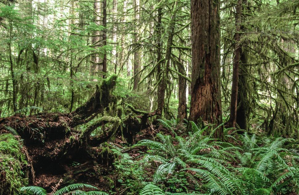 Download Free Stock HD Photo of Dense Forest Floor Online