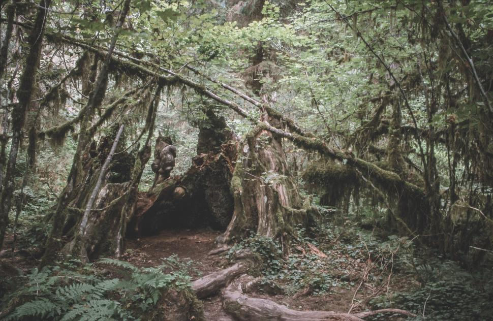 Download Free Stock HD Photo of Olympic National Forest forest floor Online