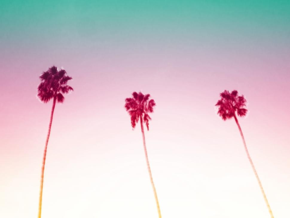 Download Free Stock HD Photo of Three Palm Trees Online