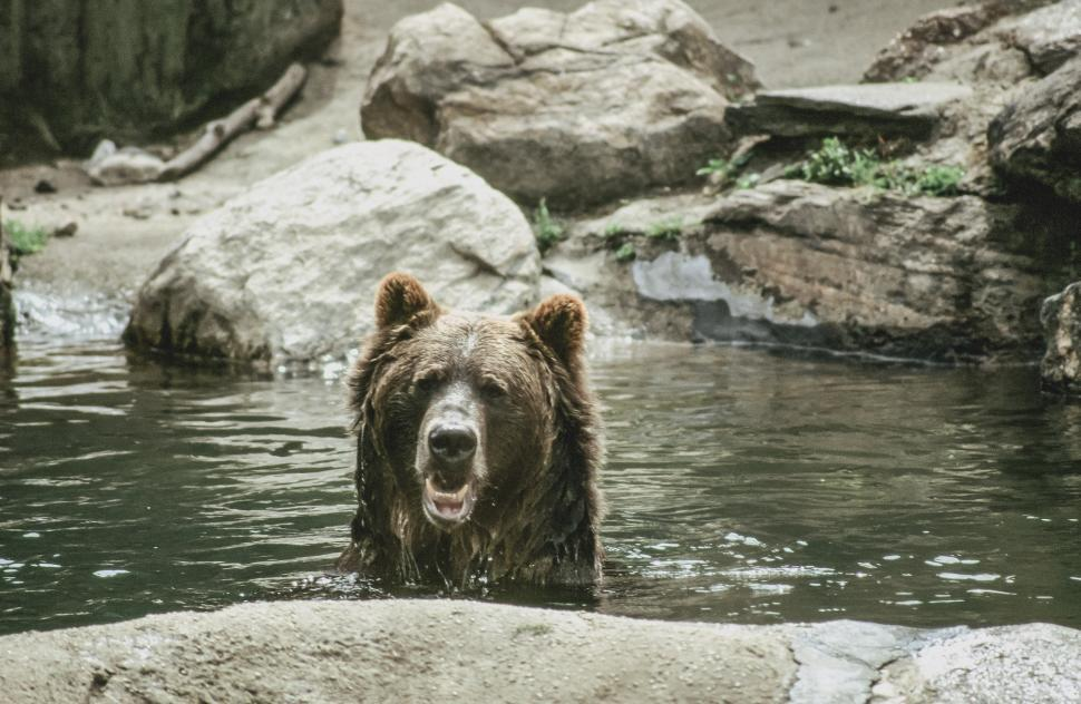 Download Free Stock HD Photo of Brown Bear Online