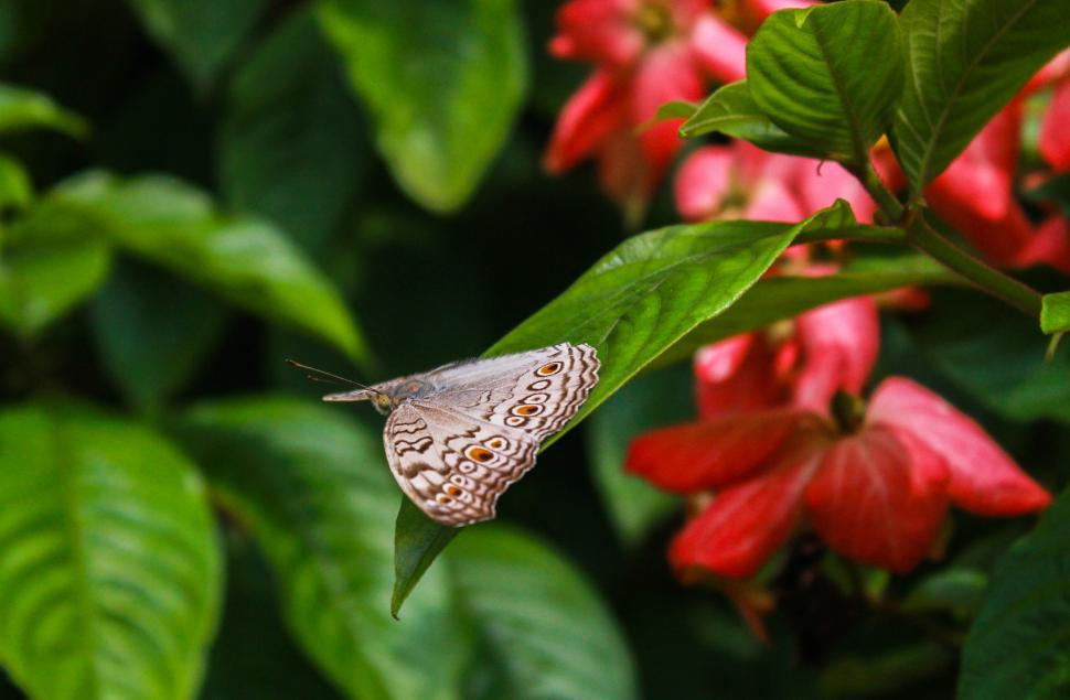 Download Free Stock HD Photo of Beautiful Butterfly Online