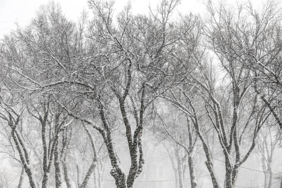 Download Free Stock HD Photo of Trees covered in snow Online