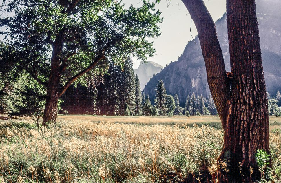 Download Free Stock HD Photo of Meadow, Yosemite National Park, California Online
