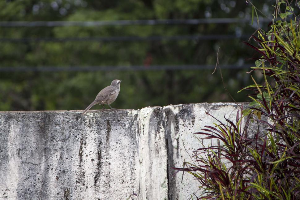 Download Free Stock HD Photo of Bird on wall Online
