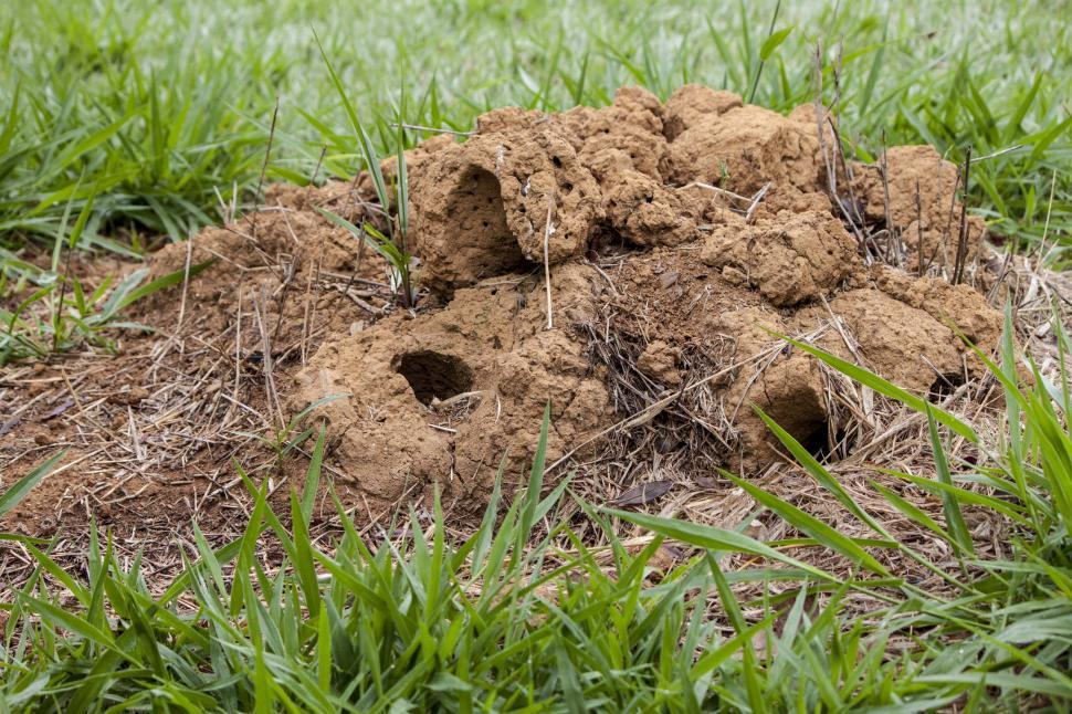 Download Free Stock HD Photo of Ant hill Online