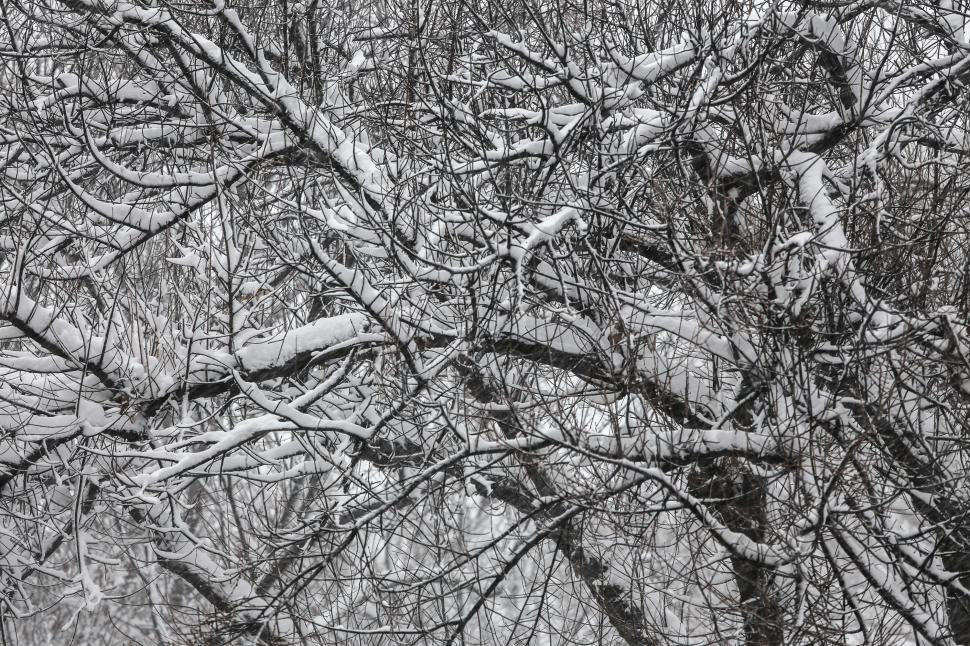 Download Free Stock HD Photo of Snowy trees Online