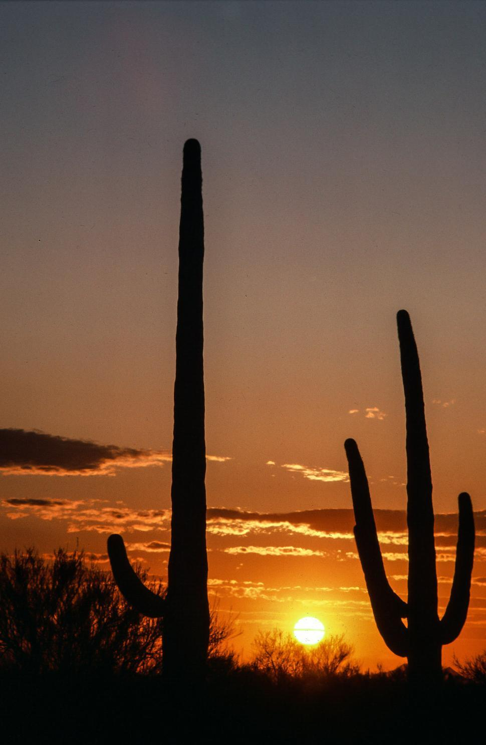 Free image of Sunset as two Saguaro Cactus seen  in the foreground