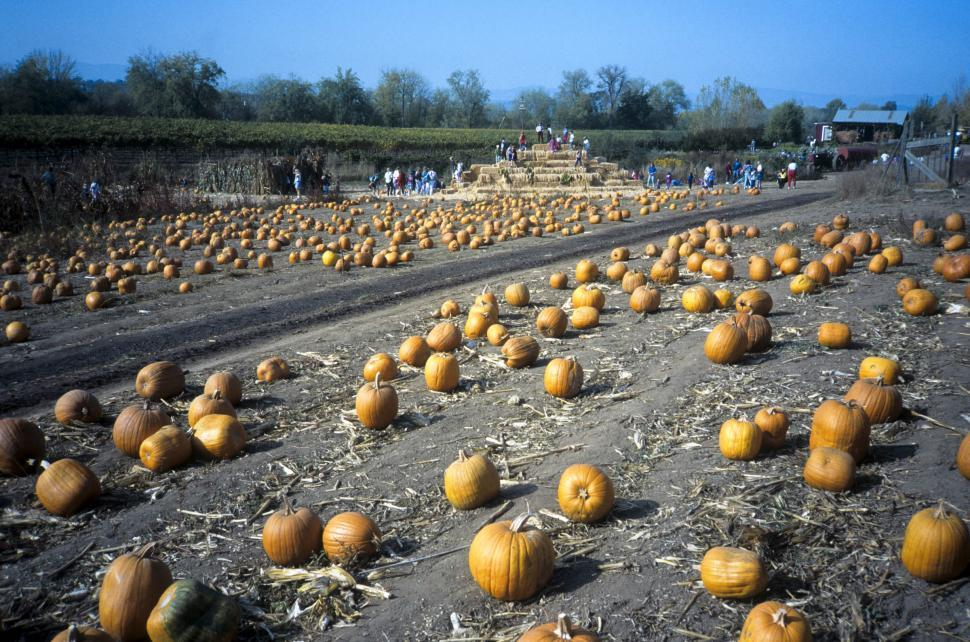 Download Free Stock HD Photo of in the pumpkin patch Online