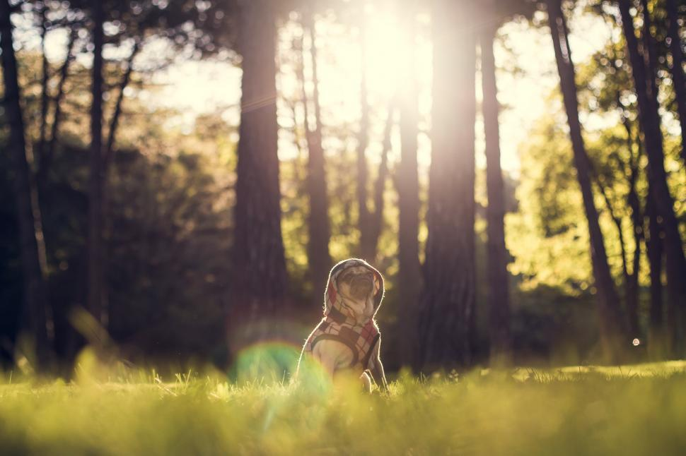 Download Free Stock HD Photo of Dog at the Park Online