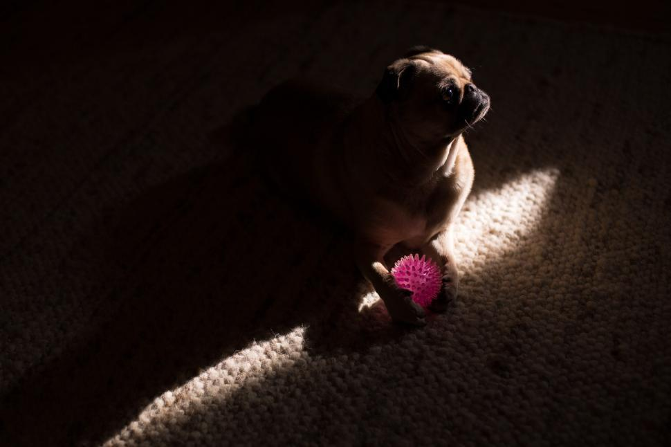 Download Free Stock HD Photo of Dog In The Shadows Online