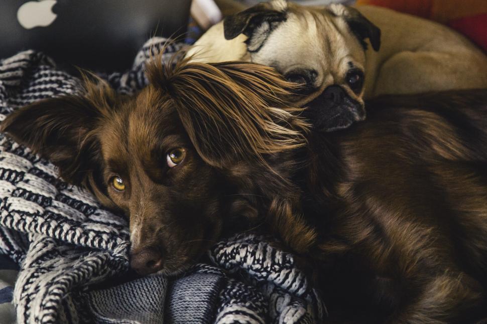 Pet Quilt Puppy Love Blue