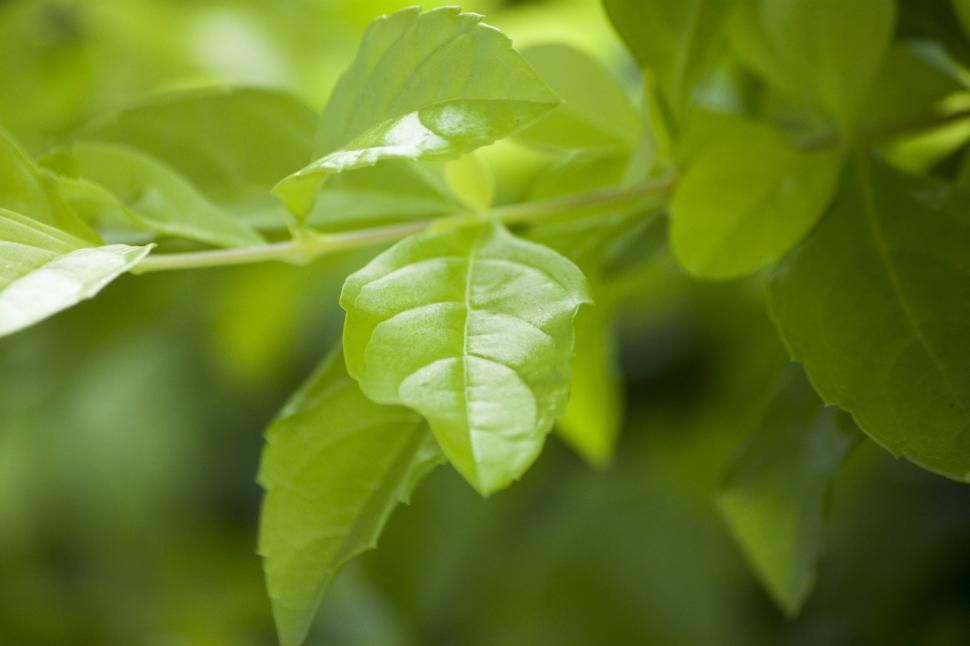 Download Free Stock HD Photo of Green leafs Online
