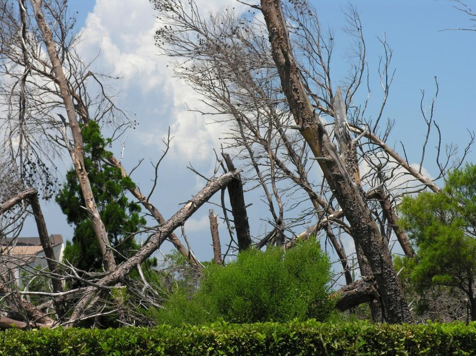 Download Free Stock HD Photo of After two hurricanes Online