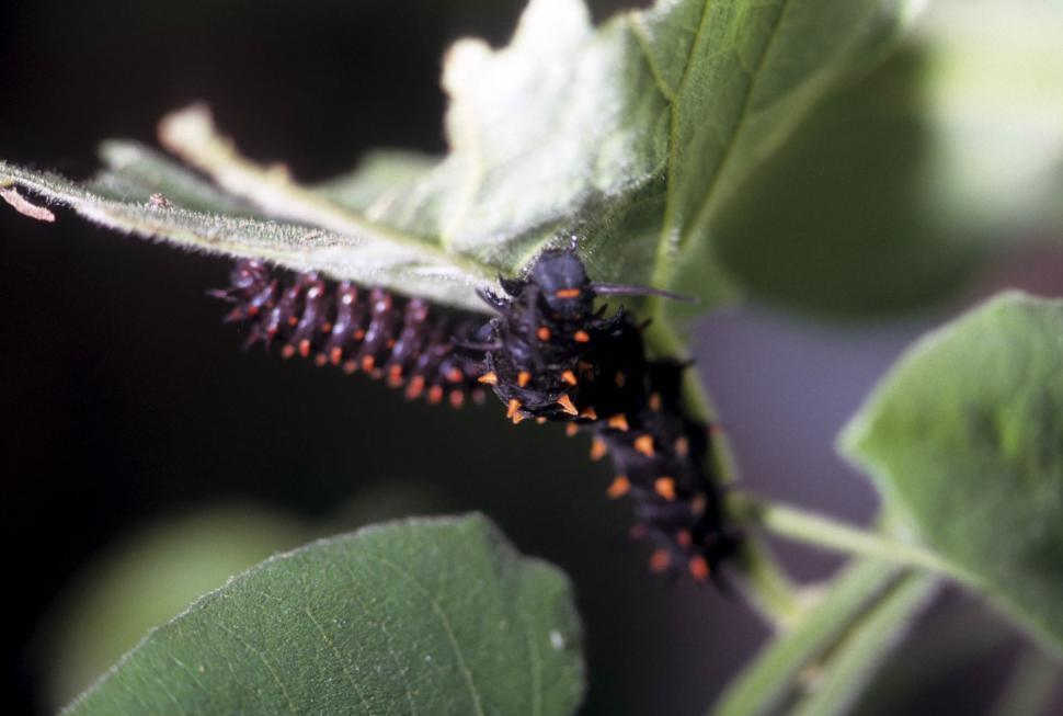 Download Free Stock HD Photo of caterpillars eating Online