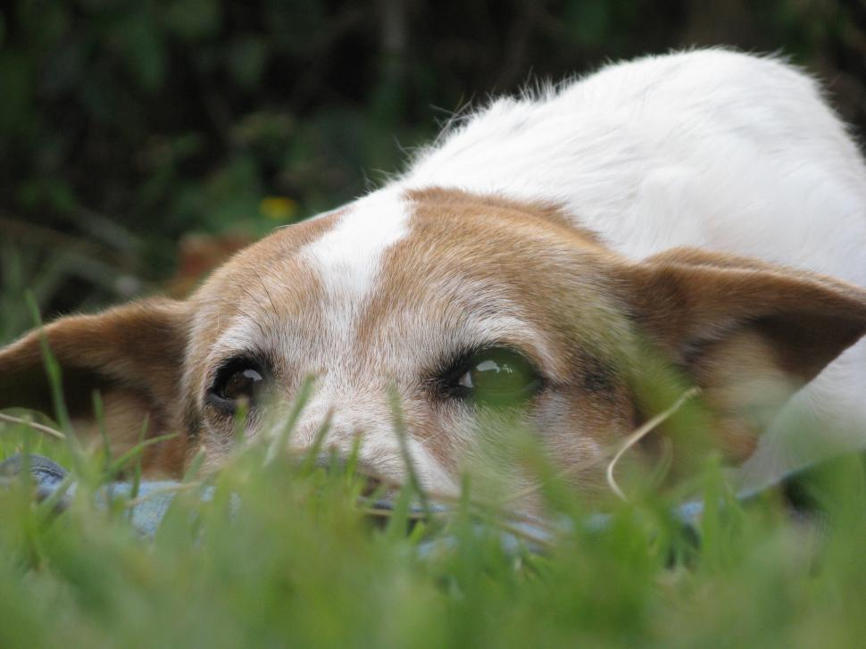 Download Free Stock HD Photo of Dog on the grass Online