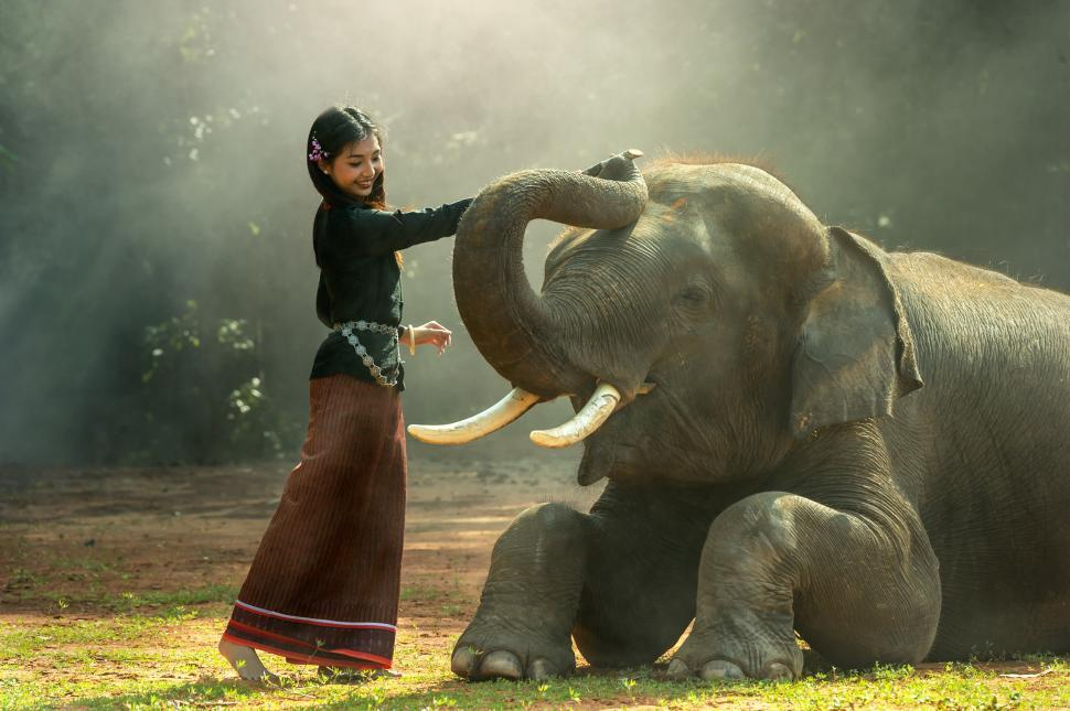Download Free Stock HD Photo of Asian Girl with the Elephant Online