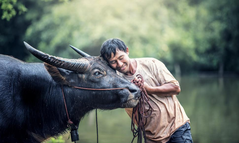 Download Free Stock HD Photo of Farmer With Buffalo Online