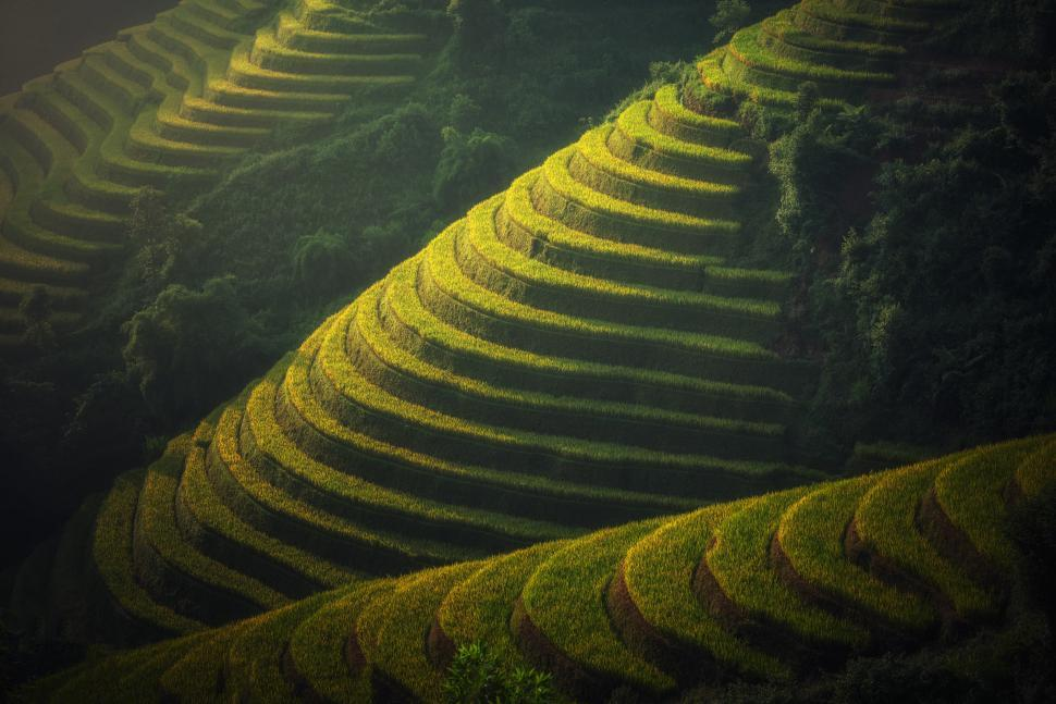 Download Free Stock HD Photo of Rice Plantation on the Mountains Online