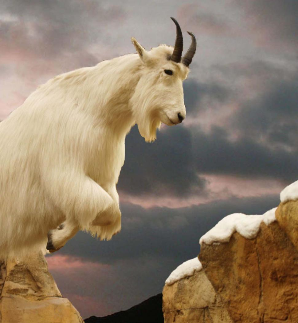 Download Free Stock HD Photo of Mountain Goat 2 Online