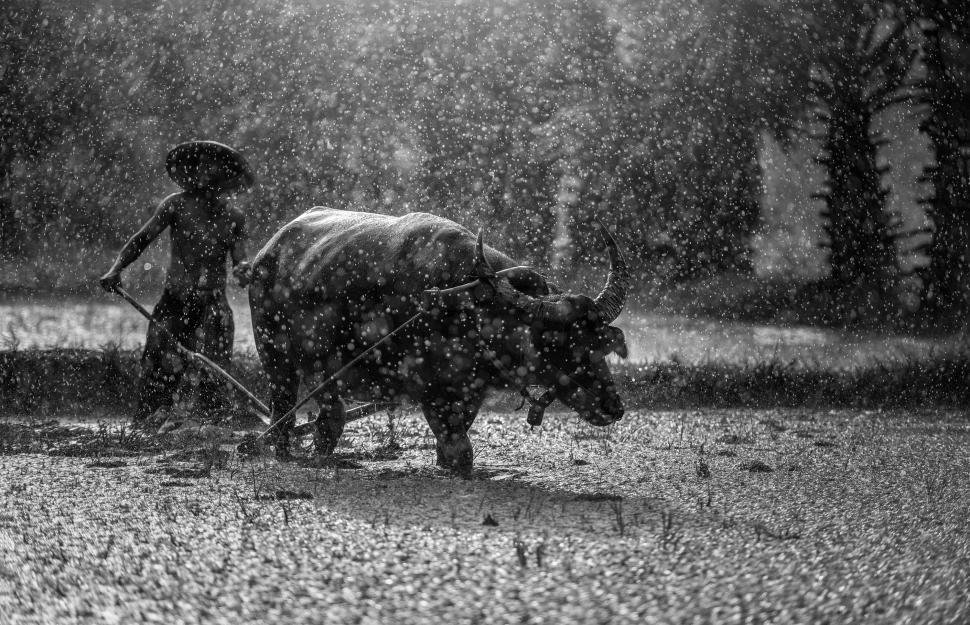 Download Free Stock HD Photo of Farming in the Rain Online