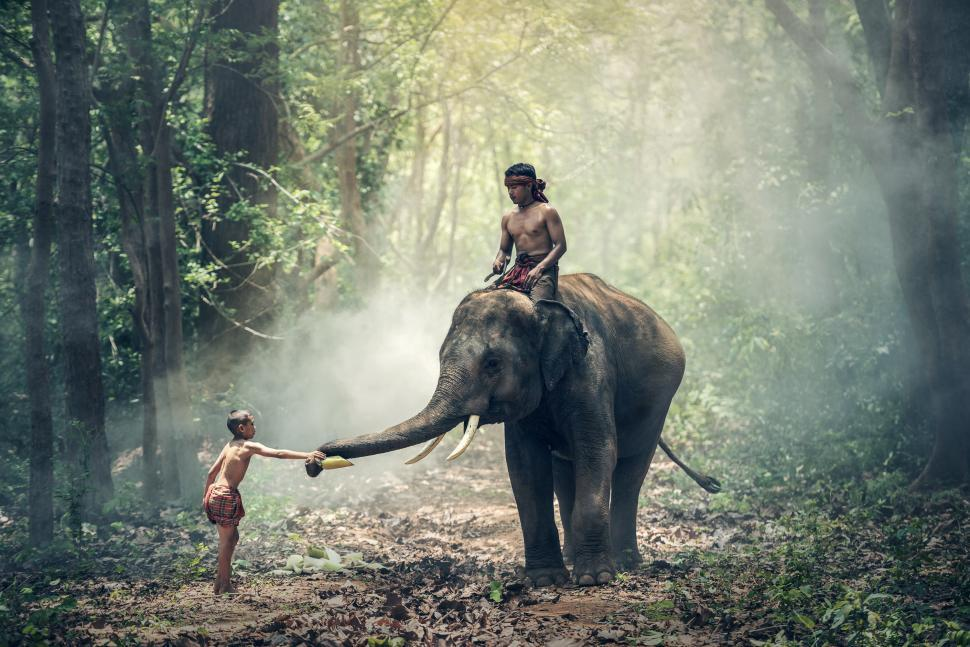Download Free Stock HD Photo of Kid and the Elephant Rider Online