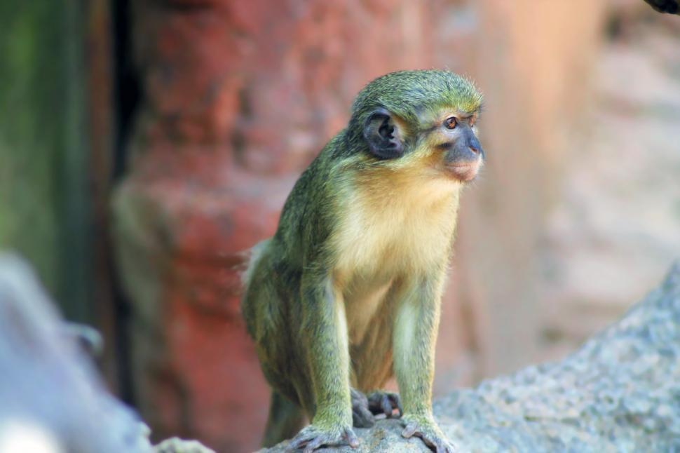 Download Free Stock HD Photo of Wild Monkey Online