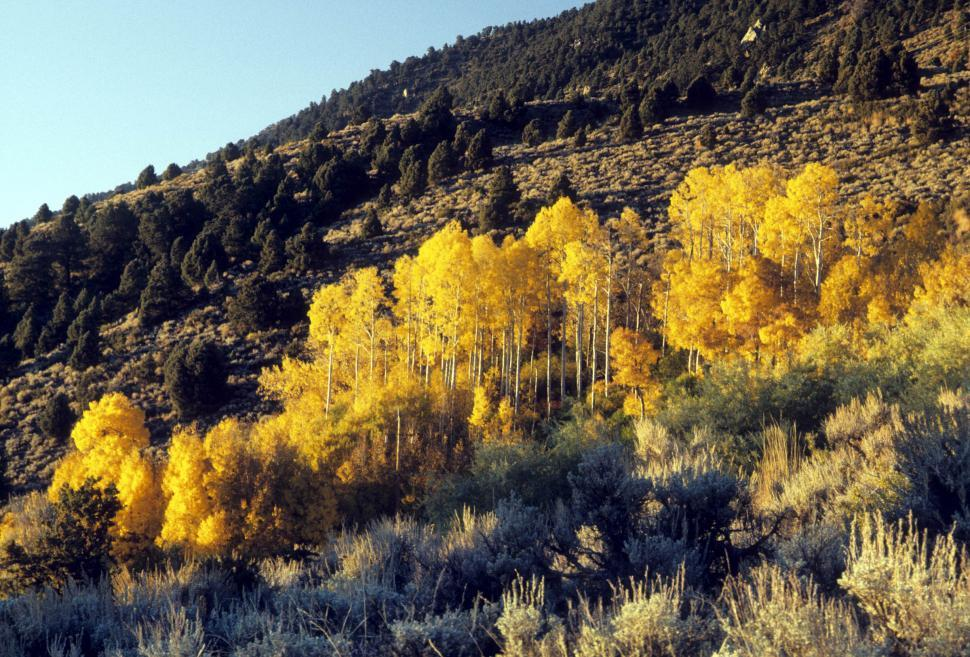 Download Free Stock HD Photo of aspen grove Online
