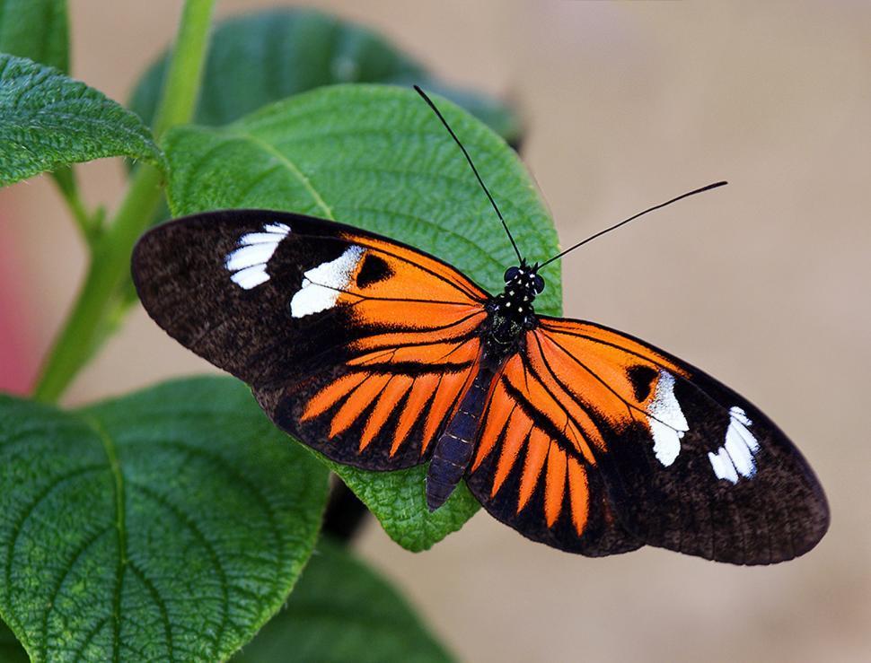 Download Free Stock HD Photo of Orange & Black Online