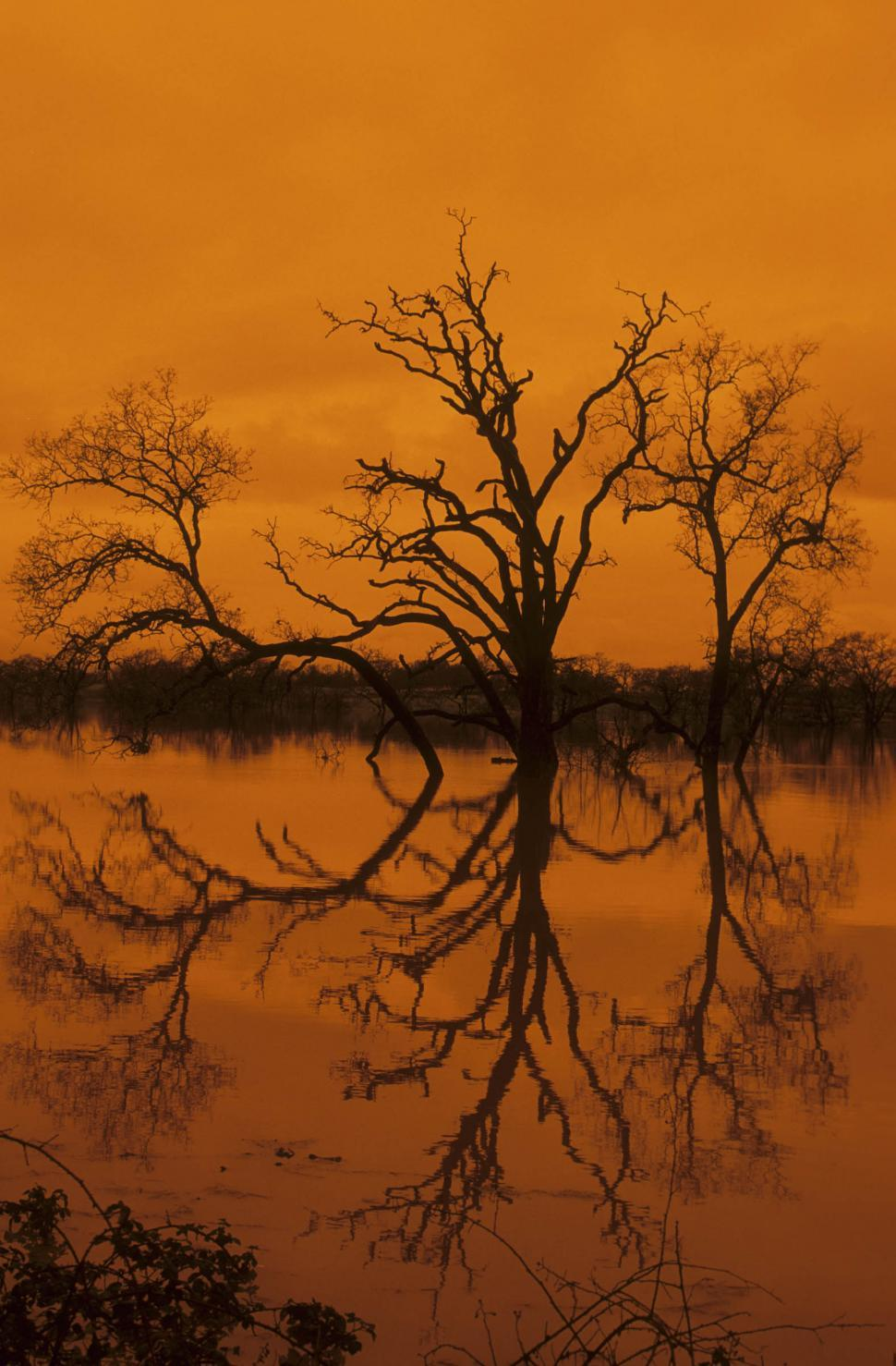 Download Free Stock HD Photo of dead trees reflected in lake Online