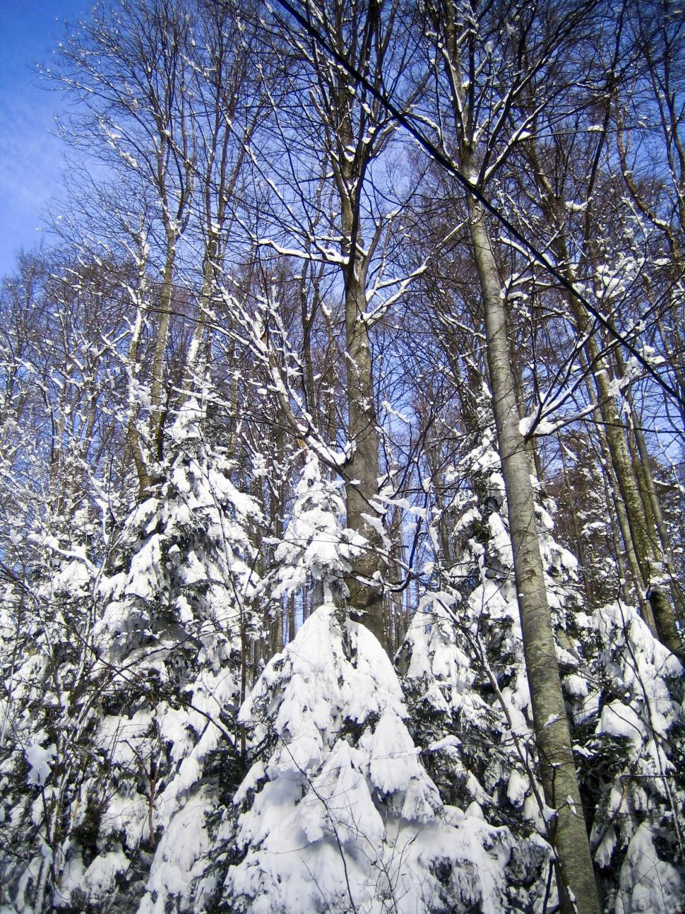 Download Free Stock HD Photo of snow on trees Online