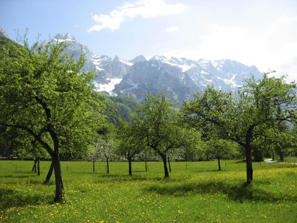 Download Free Stock HD Photo of Trees and grass in Alpine countryside Online