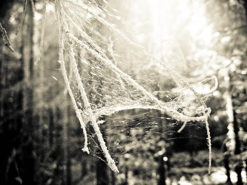Get Free Stock Photos Of Spider Net Online