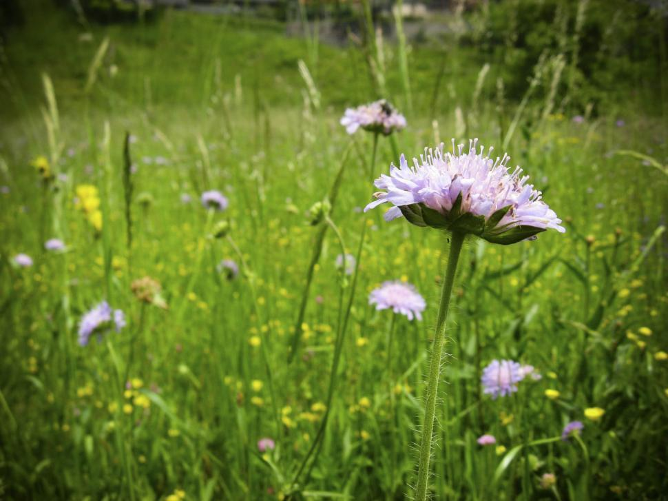 Download Free Stock HD Photo of wild flowers Online