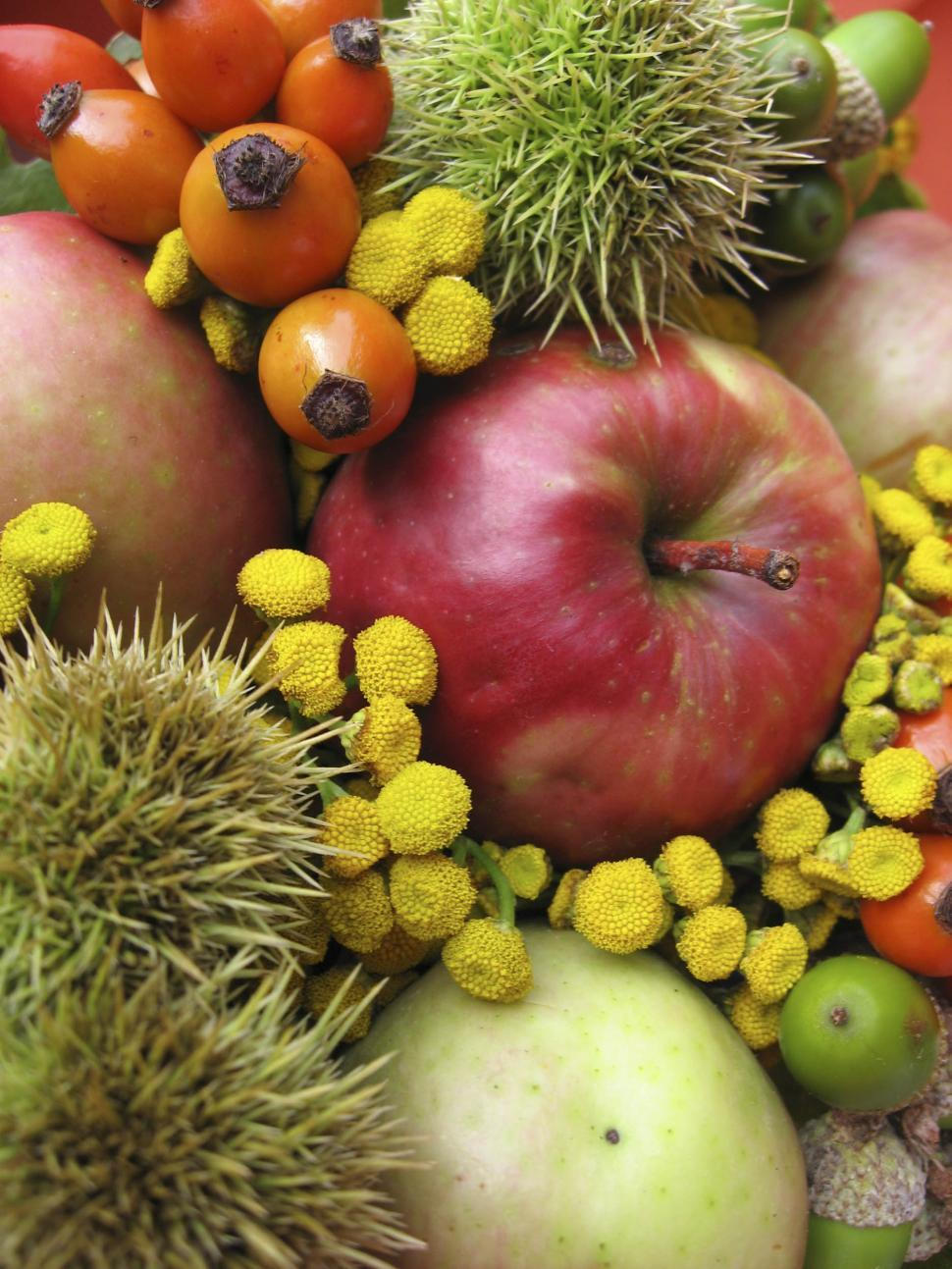 Download Free Stock HD Photo of fruits and flowers Online