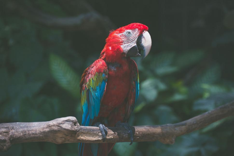 Download Free Stock Photo of bird parrot macaw lorikeet bee eater lory vertebrate house finch