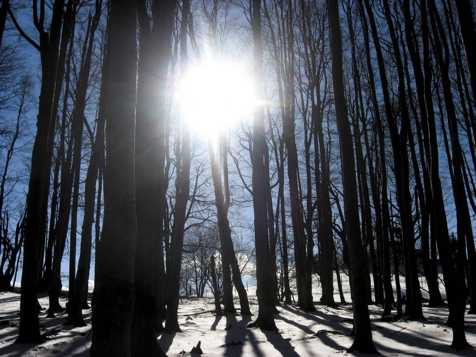 Download Free Stock HD Photo of forrest in winter Online