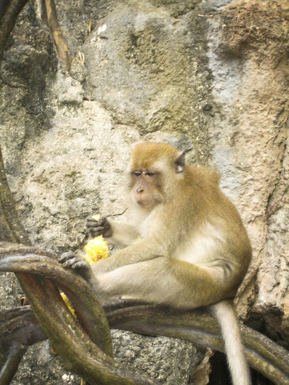 Download Free Stock HD Photo of Monkey Online