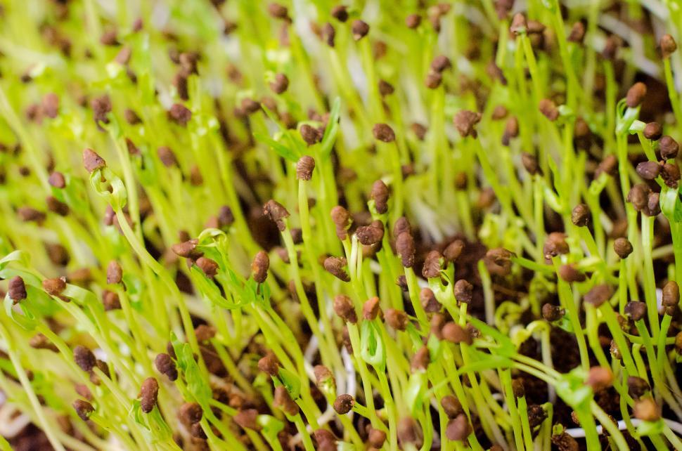 Download Free Stock Photo of Green plant sprouts