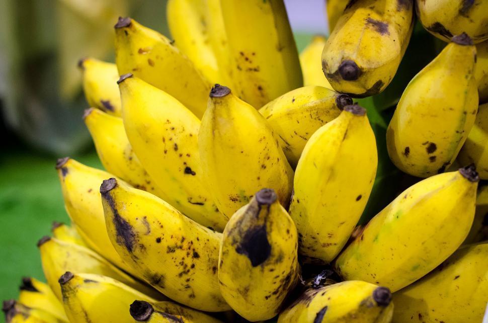 Download Free Stock Photo of Thai banana