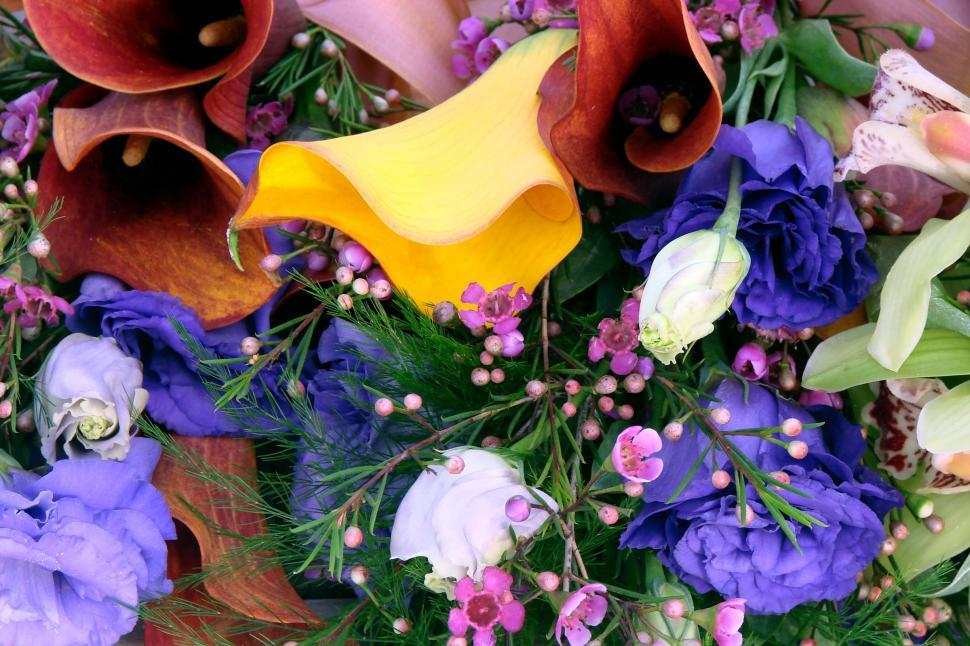 Download Free Stock Photo of Lily Bouquet