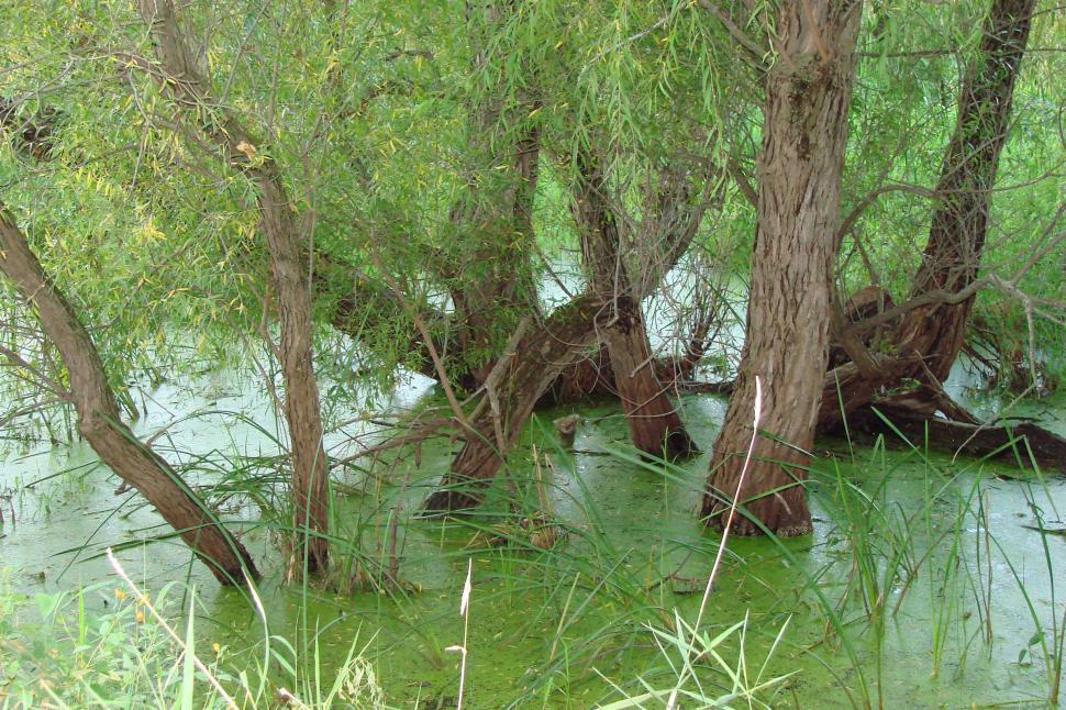 Download Free Stock Photo of River Marsh with Willows