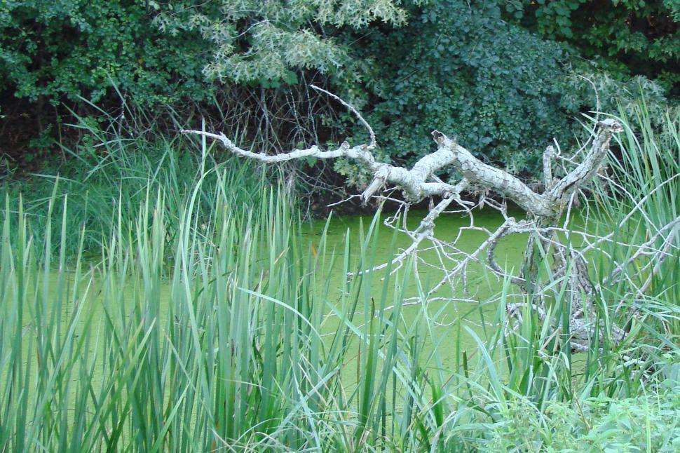 Download Free Stock HD Photo of River Marsh with Dead Tree Online
