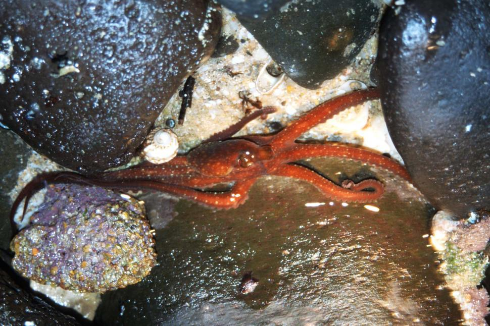 Download Free Stock HD Photo of Octopus in shallow water Online