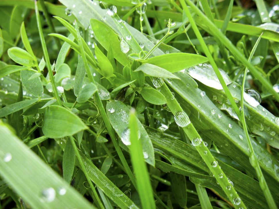 Download Free Stock Photo of dew drops on grass