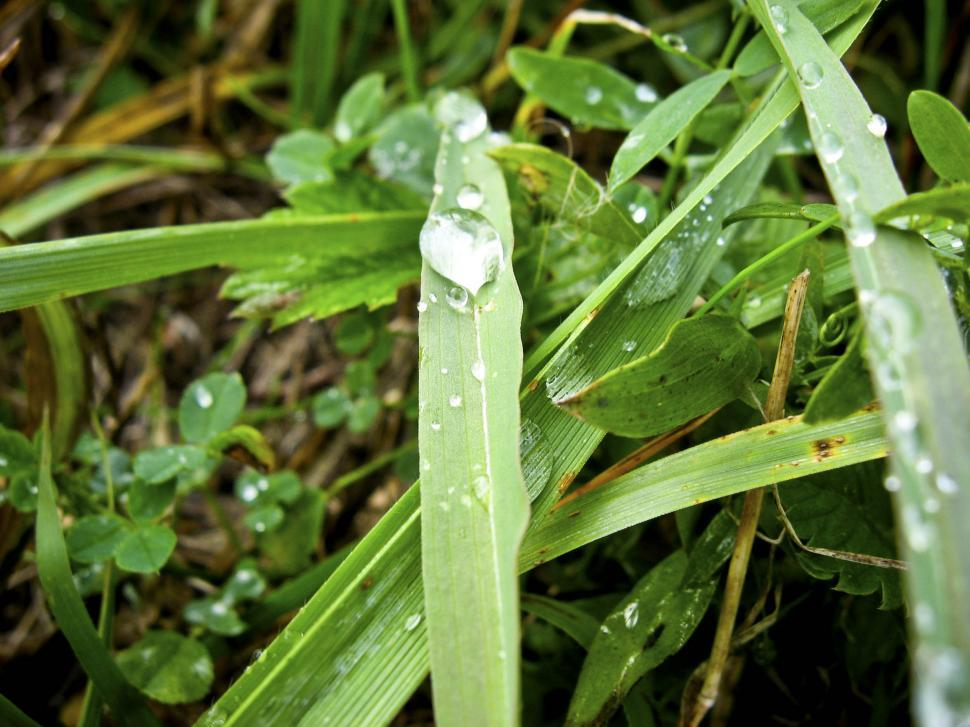 Download Free Stock Photo of drops on grass