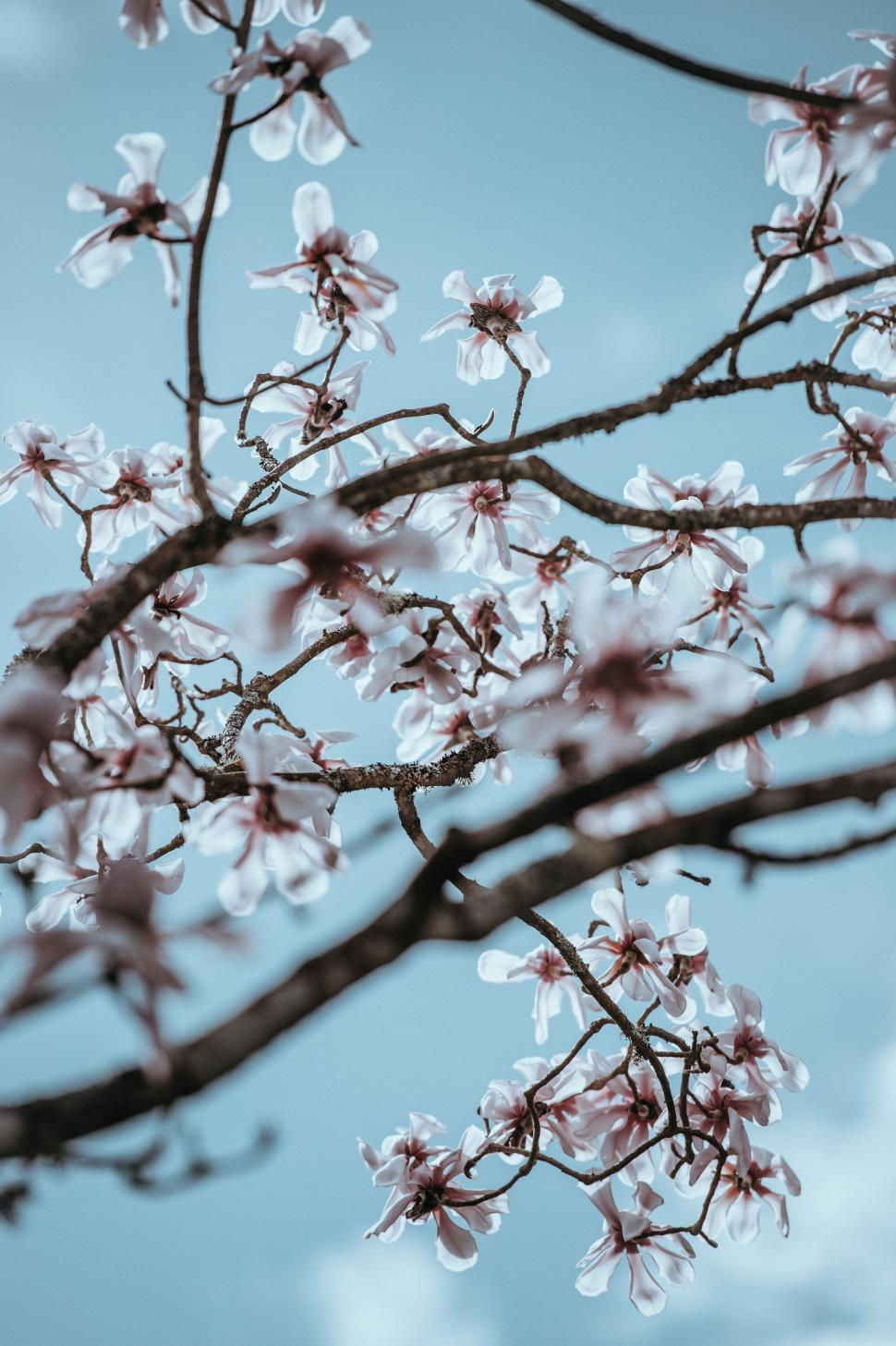 Download Free Stock Photo of branchlet branch plant tree
