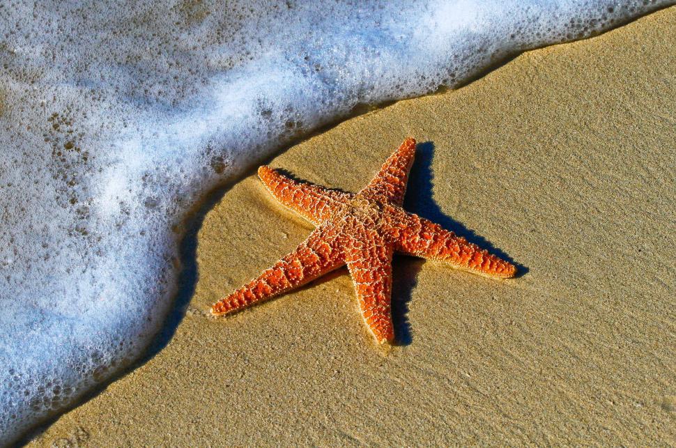Download Free Stock Photo of starfish invertebrate echinoderm animal