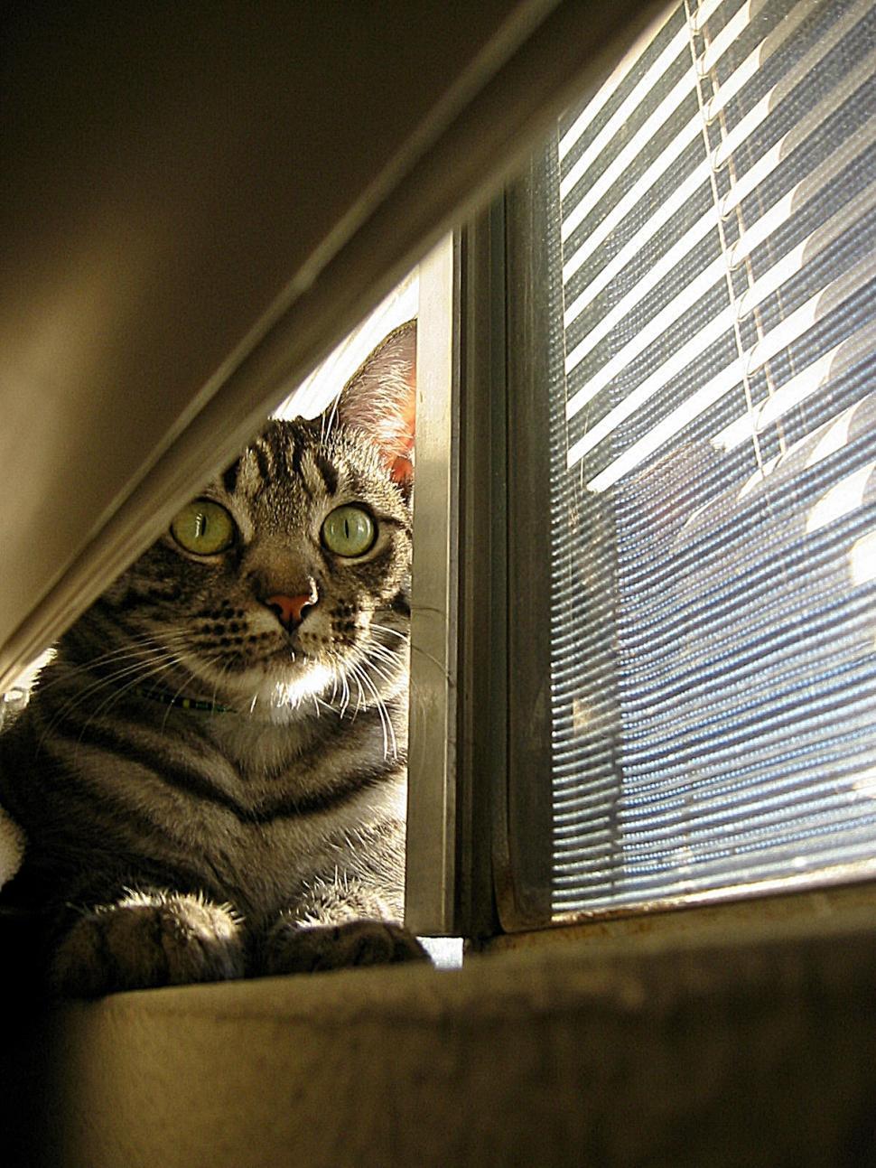 Download Free Stock HD Photo of Cat in Window Online