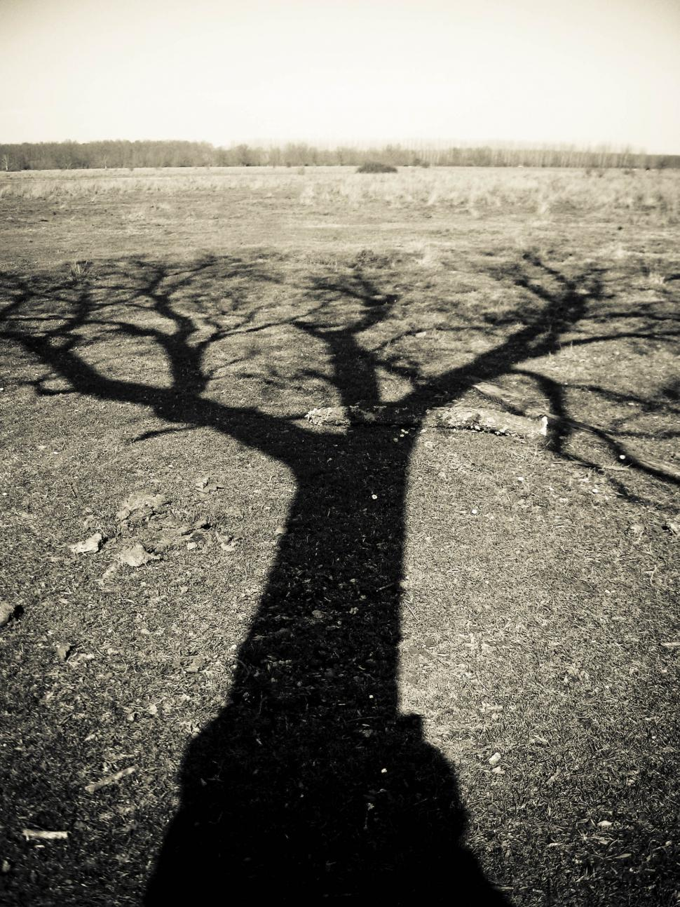 Download Free Stock Photo of shadow of lonely tree